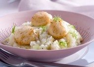 Vanille-risotto met coquilles