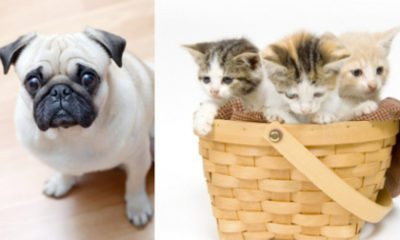 Leuke feitjes en weetjes over huisdieren. Hoeveel honden denk jij dat er in Nederlands zijn? Het antwoord vind je hier!