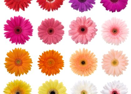 De kleur van bloemen zegt meer dan je denkt!