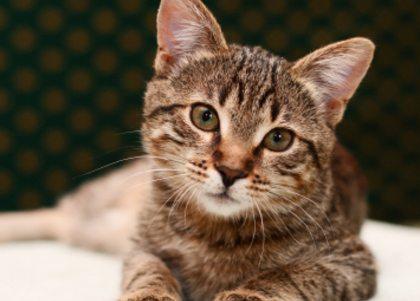 Vriendin 40: Nathalies kat redde haar leven