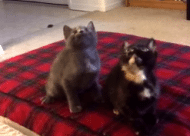 Deze twee katten kunnen bizar goed dansen