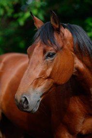 Paardenleed