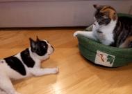 Hond wil mandje terug van kat