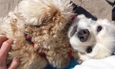 Jij en je huisdier: Sandra en Sunnie