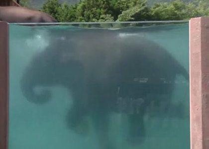Zwembad voor olifanten in Japan