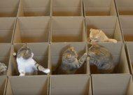 Video: kat in het bakkie