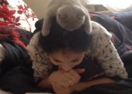 Video: deze kat leest graag mee