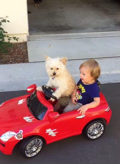 Oliver en zijn hond Daisy rijden samen in mini-auto