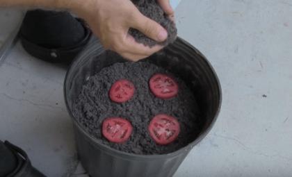 Kweek supersnel een tomatenplantje