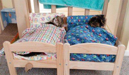Zo schattig: deze katten zijn dol op het poppenbedje van Ikea
