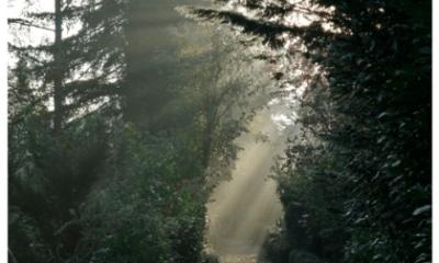 Volkstuinblog: een herfstblog in foto's