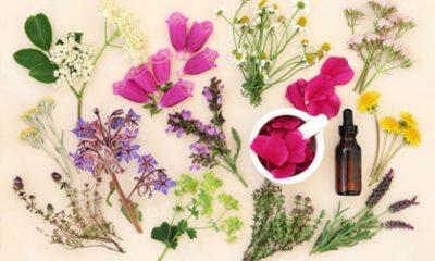 Inspiratie: bloemen drogen en inlijsten