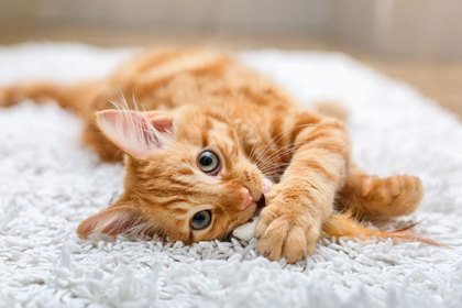 Leuke kattenfoto's gezocht!