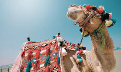 Zonovergoten Egypte: relaxen aan de Rode Zee