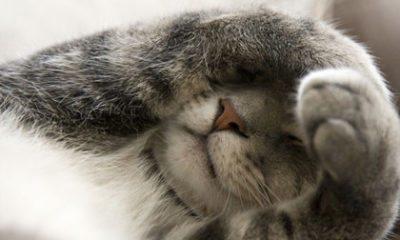 Zo houd je je kat uit de kerstboom