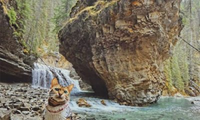 Zó schattig: deze kat komt op de mooiste plekken