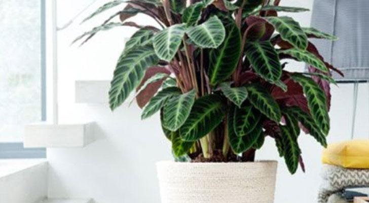 Vijf planten die weinig daglicht nodig hebben