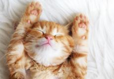 Dit is waarom katten zo goed voor onze gezondheid zijn