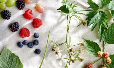 fruit wecken