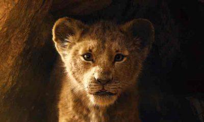 Wauw! Bekijk de eerste trailer van de levensechte The Lion King