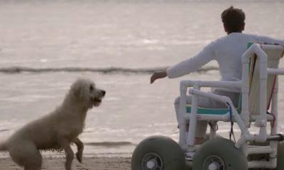 Docu-tip: Buddy, omdat honden de pijn troosten die niemand ziet