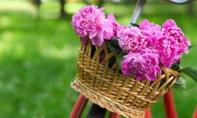 Met deze 6 handige tips blijven je bloemen langer mooi