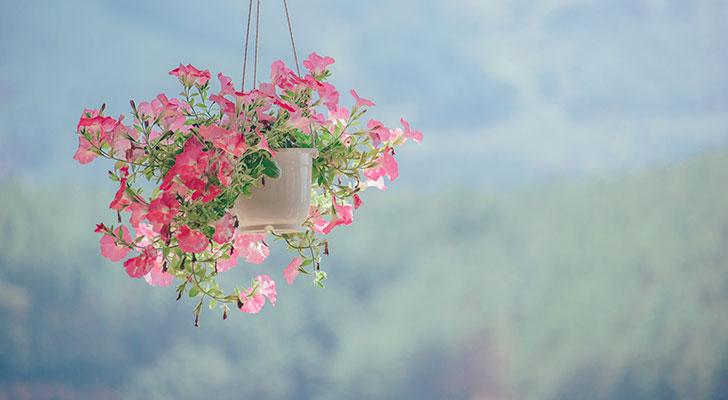Wow het is echt waar: hier kun je gratis planten halen