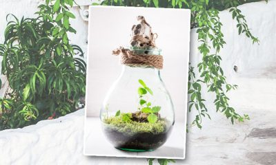 Maak je eigen ecosysteem in een paar stappen