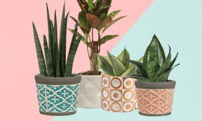 Gezellig: miniplanten voor een prikkie bij Aldi, inclusief keramieken pot
