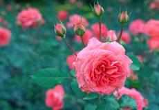 Pimp je tuin: prachtige buitenplanten in de Aldi folder v.a. € 1,59