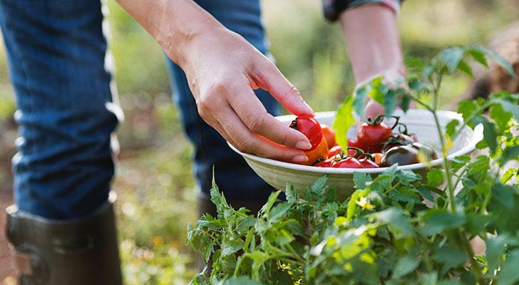 Begin jouw moestuin: zo haal je zaadjes uit een tomaat en Spaanse peper
