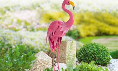Een paradijsvogel in je tuin voor maar € 9,99