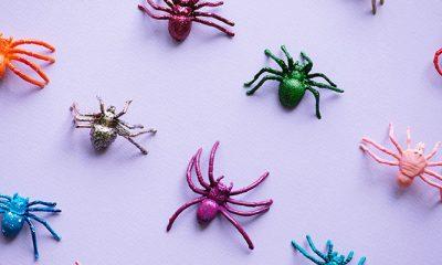 Heb je veel spinnen in huis? Deze plant lost het probleem op