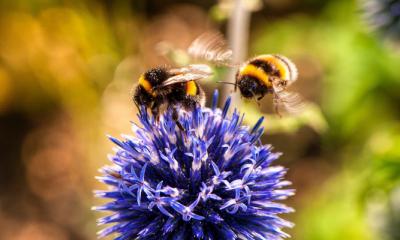 Save the bees: met deze tips komen er meer bijen in je tuin