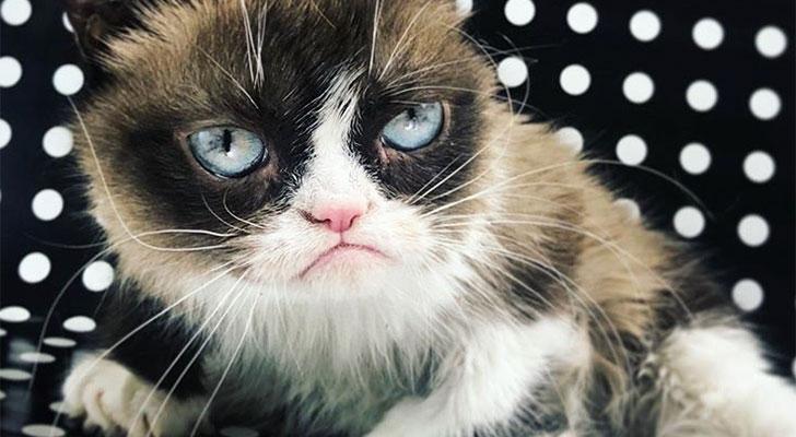 Nooo: Crumpy Cat is overleden