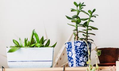 Handig: 15 makkelijke kamerplanten die niet snel doodgaan