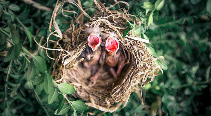 Zo leuk is het om broedende vogels in je tuin te hebben