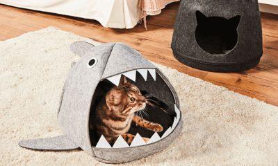 Haai! Deze dierenmand beschermt je huisdier volgende keer tegen onweer