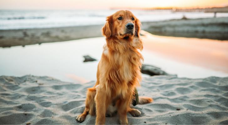 Help je huisdier de zomer door met deze handige tips