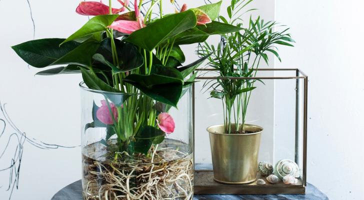 Hydroponie is hip: zo laat je een plant groeien in water