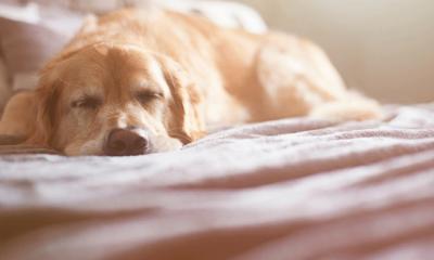 Opgepast: dit is levensgevaarlijk voor je hond in de herfst