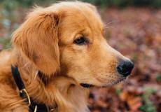 Leuk: de hond van prins Constantijn heeft eigen social media-account