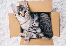 Je huisdier verhuizen zonder stress? Zo doe je dat