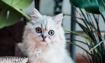 Goed om te weten: deze planten zijn giftig voor je kat