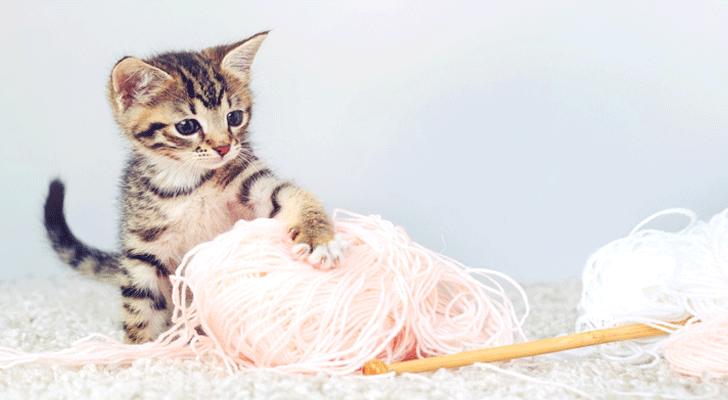 Hartverwarmend: gedumpte kittens krijgen melk van hond