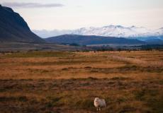 Carolyn woont in IJsland en deelt haar favoriete plekken