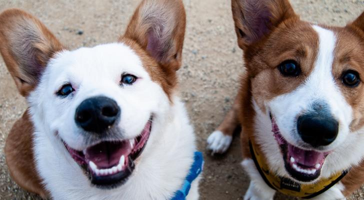 Dit zijn de populairste hondennamen van het afgelopen jaar