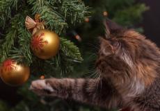 Je kat uit de kerstboom houden? Met deze 3 tips lukt het