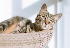 Dít zijn de populairste kattennamen van het afgelopen jaar