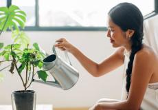Ja, ook bij jou thuis: deze 8 kamerplanten zijn niet dood te krijgen
